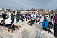 Ray Redington Jr and team run past spectators on the bike/ski trail with an Iditarider in the basket during the Anchorage, Alaska ceremonial start on Saturday, March 5, 2016 Iditarod Race. Photo by O'Hara Shipe/SchultzPhoto.com