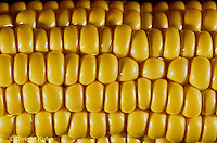 CR02-009x  Corn - kernels on cob