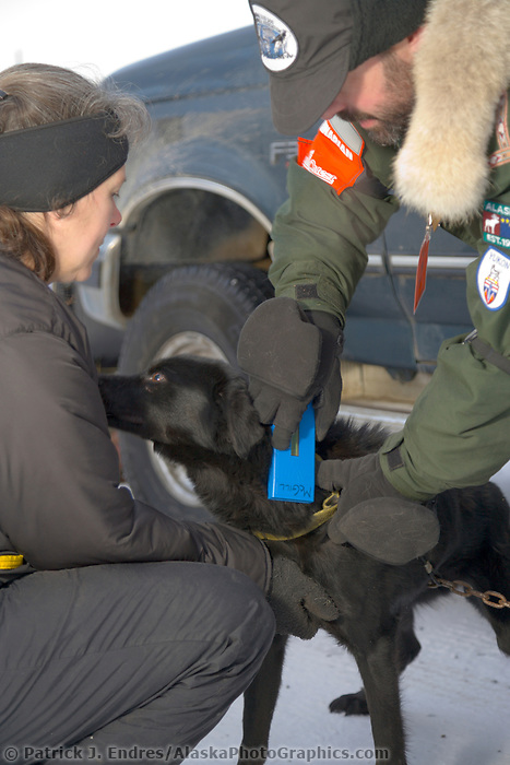 Veterinarian checks for dog identification by verifying embedded id chip implanted under the dogs skin.The start of the 1000 mile Yukon Quest sled dog race 2006, between Fairbanks, Alaska and Whitehorse, Yukon. Dubbed the toughest dogsled race in the world.