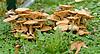 mushrooms at Delaware Park on 10/4/12