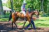 Quiet Virtue with Leigh Delacour aboard in the paddock before the Longines International Ladies Fegentri Amateur race at Delaware Park on 6/8/15