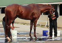 LOUISVILLE, KY - APRIL 04: Gun Runner, Louisiana Derby and Risen Star winner, is bathed after training at Churchill Downs (Louisville, KY) for the 148th Kentucky Derby. (Photo by Mary M. Meek/Eclipse Sportswire/Getty Images)