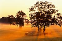 Horse farm on misty morning at sunrise