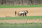 Amishman disking field with horses.