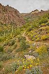 Peralta Canyon and Dutchman Trail, Superstition Mountains, Arizona