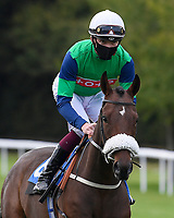 Sebs Welcome ridden by Rob Hornby goes down to the start of The Radcliffe & Co Novice Median Auction Stakes (Div 1) during Horse Racing at Salisbury Racecourse on 11th September 2020