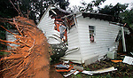 Twenty-year-old Chris Paulette walks along a five foot in diameter oak tree that split the house he rents in half as Tropical Storm Jeanne passed through Tallahassee, Florida in the early morning hours of September 27, 2004.  Paulette was pulled from his bed under the wood and insulation that buried him in his bedroom (inside the window, at right) by roommates.