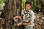Mountain Lion (Puma concolor) biologist, Sean McCain, setting up camera trap, Santa Cruz Puma Project, Santa Cruz Mountains, California