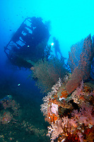 A diver exploring the B-25 'Mitchell' bomber dive site, Madang, Coral sea, Pacific ocean, Papua New Guinea, Asia