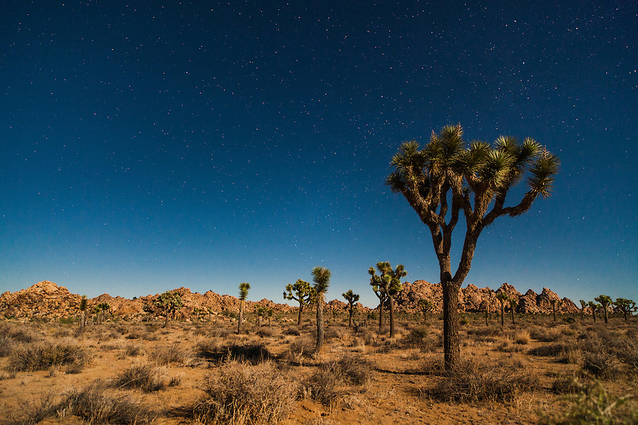 Stars and satellites shine above the night landscape at Joshua Tree National Park, California.