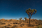 Stars and satellites shine above the night landscape at Joshua Tree National Park, California.