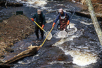 Fisheries reasearch using electroshocking on the Hurricane River near Grand Marais Michigan in Michigan's Upper Peninsula.