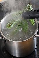 Zweig eines Nadelbaumes wird in kochendes Wasser eingetaucht, um pressbar zu werden. Botanik, Botanisieren, botany, Herbar, herbaria, Herbarien, herbarisieren, herbier, Pflanzenbestimmung, Pflanzenherbar