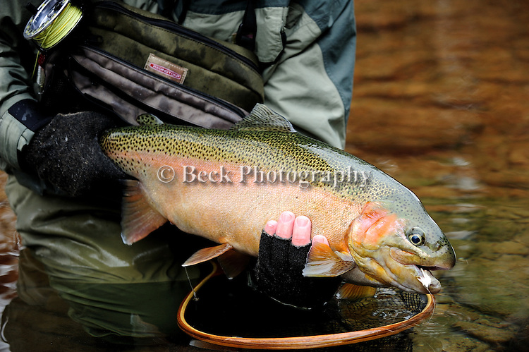 Winter trout