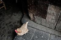 """Les maisons rondes, les Tulous, sont des """"villages rentrés"""", exactement à l'image d'un village rural ordinaire avec ses activités agricoles (séchage des récoltes du thé...) et ses animaux de basse cour..."""