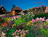 Tom Mackie, FLOWERS, photos, Walled Garden at Packwood House, Lapworth, Warwickshire, England, GBTM892328-2,#F# Garten, jardín