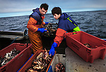 Calum Greenhalgh and his son Jack working aboard their boat 'Mary D'. Calum and his wife Tracey own and run the 'Fresh from the Sea' Fish Shop in Port Isaac, Cornwall, U.K.<br />