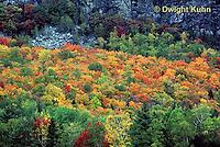 KN07-030b  Forest - autumn, Mt. Kineo, Maine