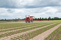 Spraying lettuce- Lincolnshire, June