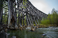 Galihana River Trestle near McCarthy, Alaska. Built by the Kennecott Mine company at a cost of $25 million in 1911, the rail it served hauled copper ore out of the Kennecott Mine 196 miles to Cordova. Photo by James R. Evans