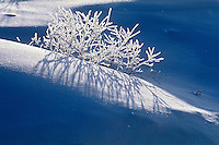 Hoarfrost on vegetation at Isabel Lake<br /> Kenora<br /> Ontario<br /> Canada