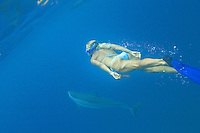 Snorkeler with Hawaiian Spinner Dolphins; Stenella Longirostris