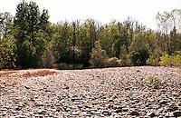 Parco del Ticino presso Vizzola Ticino (Varese). Riva del fiume --- Park of Ticino near Vizzola Ticino (Varese). River bank