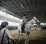 Все мы немножко лошади (1988)