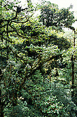 Monte Verde, Costa Rica. Overview of unspoilt cloud forest.