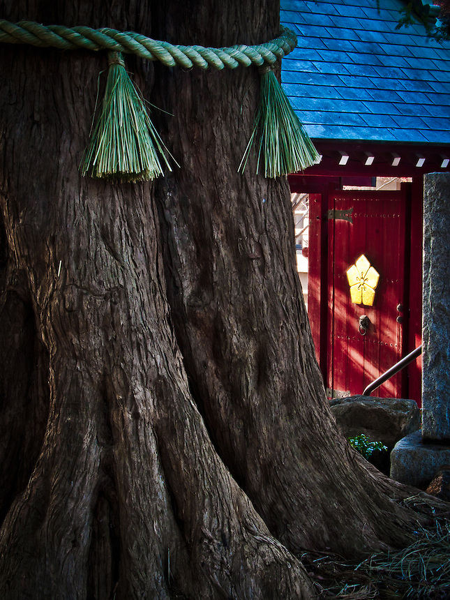 Atmospheric moody shot of main gate & tree with large kata for Zanyomitsuji temple in Todoroki, Tokyo.
