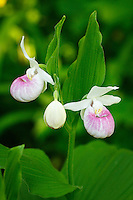 &quot;Minnesota Royalty&quot;<br />