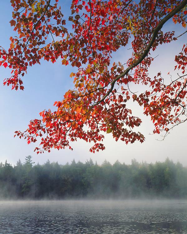 Foggy sunrise on Middle Pond in the St. Regis Canoe Area; Adirondack Park and Preserve, NY