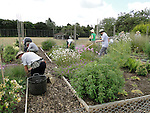RHS staff working on the Plants for Bugs plots at Deers Farm, Wisley.