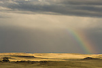 Rainbow at end of afternoon thunderstorm, high plains of the Thunder Basin National Grassland, Wyoming.