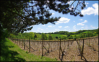 BNPS.co.uk (01202 558833)<br /> Pic: KnightFrank/BNPS<br /> <br /> Grape expectations...<br /> <br /> Wine lovers will never have to buy a bottle again if they get their hands on this property - on the market for a guide price of &pound;1.75million.<br /> <br /> Frithsden Vineyard is a ready-made 'lifestyle change' property with a five-acre vineyard of three different grape varieties and facilities to press and bottle their own wine.<br /> <br /> The stunning property in the foothills of the Chilterns includes a four-bedroom house as well as a vineyard shop and tasting bar - perfect for oenophiles.<br /> <br /> When Natalie and Simon Tooley bought the plot in 2006, the previous owners had run it as a vineyard since 1971 but pulled up all the vines in 2001 when it became too much to manage in their old age.<br /> <br /> The Tooleys started again from scratch with no equipment and no vines but transformed the land into a successful business where they produce about 4,000 bottles a year - which normally sell out by September - and host wine tasting and dining events.