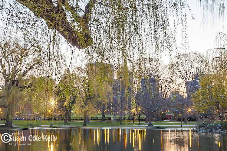 Dawn at the Boston Public Garden, Boston, Massachusetts, USA