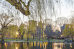 Dawn at the Boston Public Garden, Boston, Massachusetts, USA