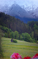 Cattle shed animal shelter in alpine meadow, Imst district, Tyrol,Tirol, Austria.