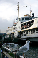 Ferry boat and seagulls, Istanbul, Turkey