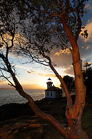 Lime Kiln Point Lighthouse framed by Pacific Madrone, Lime Kiln Point State Park, San Juan Island, Washington, USA