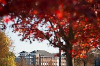 Fall Leaves with Deavenport Hall in background.<br />  (photo by Megan Bean / &copy; Mississippi State University)