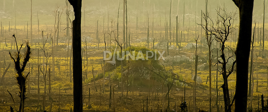 The 1997/98 forest fires in East Kalimantan were the largest in human history, and recognized as one of the greatest environmental distaters to date. Affording to CIFOR, 11.7 million hectares of forest were lost, and economic impacts topped US$ 6 billion. Losses to biodiversity and human life and health cannot be counted.
