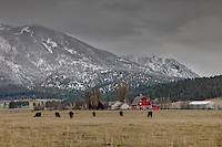 Wallowa County farm and pasture in late fall,Upper Prarie Creek,Oregon