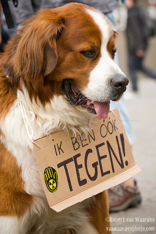 A dog stands (sits) with anti Nuclear protestors at an Anti Nuclear Rally held on the Dam Square in Amterdam, the Netherlands on April 16, 2011. Thousands of people gathered on the square to protest recent Netherlands government movements to increase nuclear power in the country.