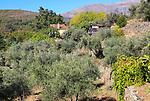 Farmhouse in olive grove, Aldenueva de la Vera, La Vera, Extremadura. Spain