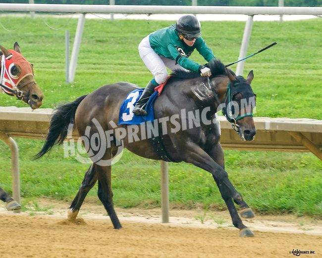War Academy winning at Delaware Park on 7/28/16