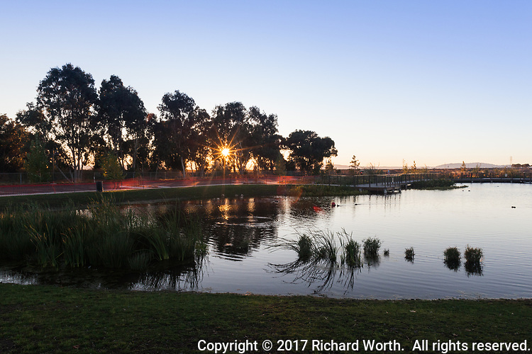 "Near sunset, a sunburst glows through the trees and lights a portion of the newly renovated San Lorenzo Park known as ""The Duck Pond""."