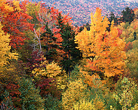 Hillside in fall color; White Mountains National Forest, NH