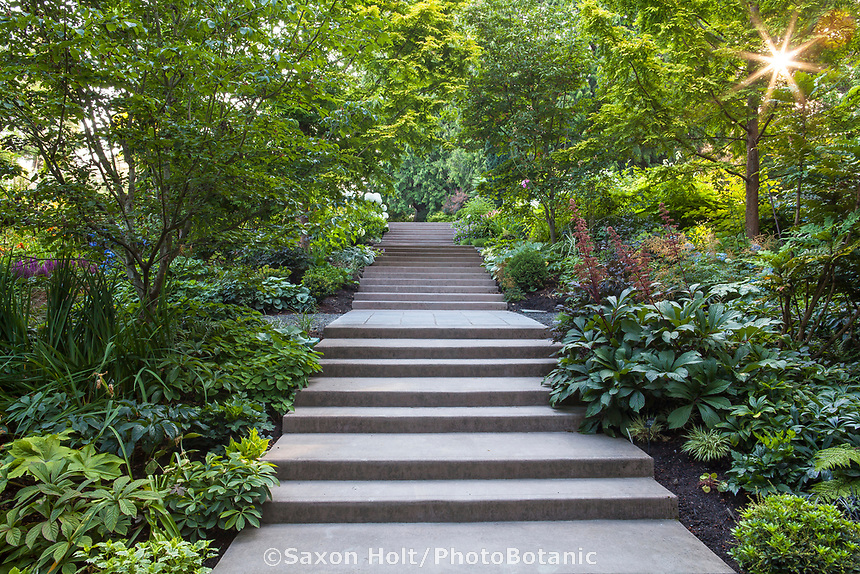 Stairway through mixed borders on hill in Bellevue Botanical Garden on sunny morning