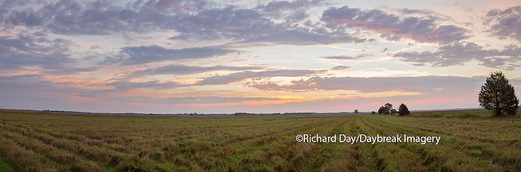 63893-02602 Sunrise at Prairie Ridge State Natural Area, Marion County, IL